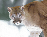 Realistic Paintings - Puma in the Snow by Alina Kaplanov