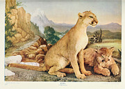 Puma Paintings - Pumas by Unknown