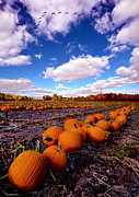 Pumpkin Patch Photos - Pumkin Daze by Phil Koch