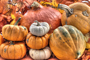 Gourd Posters - Pumpkin and Gourds Poster by Juli Scalzi