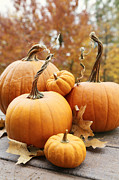 Sandra Cunningham - Pumpkin and gourds with leaves