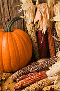 Husks Posters - Pumpkin and Indian corn still life Poster by Garry Gay