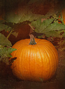 Orange Pumpkin Prints - Pumpkin Print by Angie Vogel