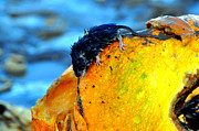 Wet Mixed Media Prints - Pumpkin Dweller Print by Heather L Giltner