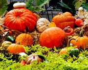 Orange Pumpkins Prints - Pumpkin Harvest Print by Karen Wiles