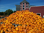 Farmstand Digital Art Posters - Pumpkin Heaven Poster by David Schneider