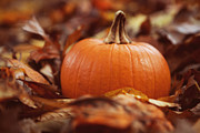 Cottage Chic Posters - Pumpkin in Leaves Poster by Kim Fearheiley