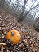 Robert Nickologianis - Pumpkin in The Woods