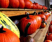 Farm Stand Prints - Pumpkin Lineup Print by Julie Grandfield