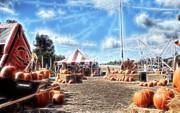 Cindy Nunn - Pumpkin Patch 1