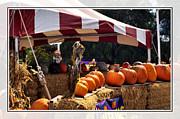 Cindy Nunn - Pumpkin Patch 10