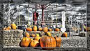 Cindy Nunn - Pumpkin Patch 7