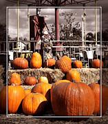 Cindy Nunn - Pumpkin Patch 9