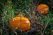 Pumpkin Patch Print by Gene Sherrill