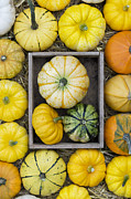 Pumpkins Framed Prints - Pumpkin pattern Framed Print by Tim Gainey
