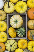 Pumpkin Pattern Print by Tim Gainey