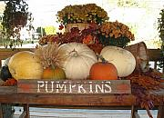 Rose Cottage Gallery Posters - Pumpkin Welcome  Poster by Barbara McDevitt