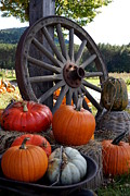 Pumpkin Wheel Print by Kerri Mortenson