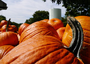 Farm Stand Prints - Pumpkins 1 Print by Richard Reeve