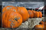 Cindy Nunn - Pumpkins 2