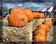 Cindy Nunn - Pumpkins 4