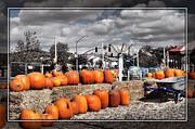Cindy Nunn - Pumpkins 5