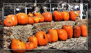 Cindy Nunn - Pumpkins 6