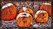 Cindy Nunn - Pumpkins 8