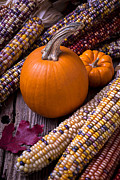 Corns Posters - Pumpkins and corn Poster by Garry Gay