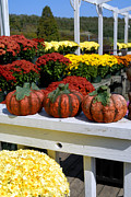 Gourd Posters - Pumpkins and Fall Flowers Poster by Amy Cicconi