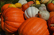 Fall Photos Originals - Pumpkins and Gourds by Ruth  Housley