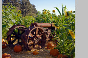 Sonoma County Originals - Pumpkins and Tractor by Kathy Sidjakov