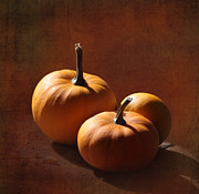 Miniature Photos - Pumpkins by Angie Vogel