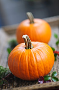 Pumpkins Photos - Pumpkins by Elena Elisseeva