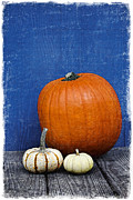 Thanksgiving Art Prints - Pumpkins Print by Elena Nosyreva