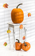 Gourds Posters - Pumpkins For Thanksgiving Poster by Christopher and Amanda Elwell
