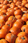 Mike Watson - Pumpkins in Waiting