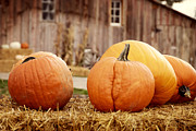Holidays And Celebrations Prints - Pumpkins Print by Juli Scalzi
