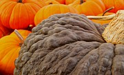 Knobby Prints - Pumpkins Print by Julie Grandfield