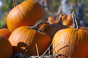 Orange Pumpkins Prints - Pumpkins Print by Sharon  Talson