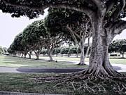 Tree Roots Photo Posters - Punchbowl Cemetery - Hawaii Poster by Daniel Hagerman