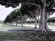 Punchbowl Cemetery - Hawaii Print by Daniel Hagerman