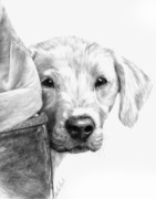 White Dog Drawings Framed Prints - Puppies and Wellies Framed Print by Sheona Hamilton-Grant