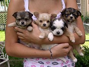 Puppies Metal Prints - Puppies in Marias arms Metal Print by John Lautermilch