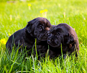 Friend Art - Puppies on the grass by Michal Bednarek