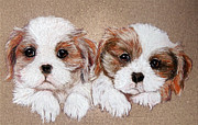 Puppies Pastels Framed Prints - Puppies Framed Print by Ruth Jamieson