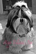 Glenna McRae - Puppy Bijou Valentine Greeting Card