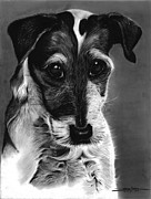Dogs Drawings - Puppy by Dainna Hudson