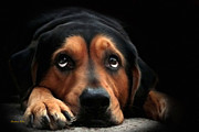 Depressed Metal Prints - Puppy Dog Eyes Metal Print by Christina Rollo