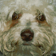 Dogs Digital Art Metal Prints - Puppy Eyes Metal Print by Ernie Echols